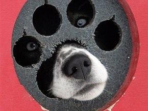 В Испании кокер-спаниели признаны самой агрессивной породой собак