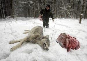 Десять тысяч шведов выйдут охотиться на 27 волков