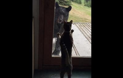 Бесстрашная кошка на Аляске прогнала медведя от хозяйского дома