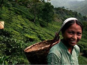 Индия сократила экспорт чая в феврале на 25%