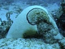 Ученые: Из-за нехватки кислорода в океанах образуются подводные пустыни