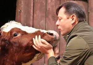 Протестующие против принятия закона о рынке земли пытаются провести корову на территорию Рады