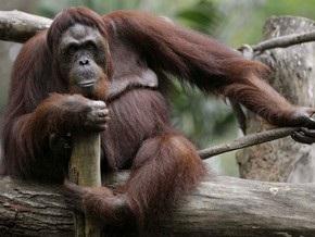 В обезьяннике киевского зоопарка закончился карантин