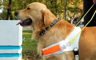 У слепой москвички украли собаку-поводыря