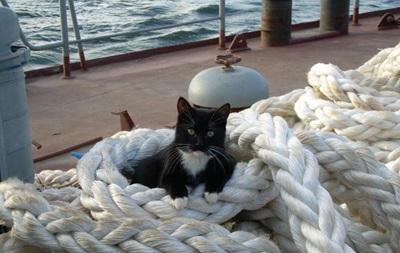 В Эстонии открыли вакансию корабельного кота