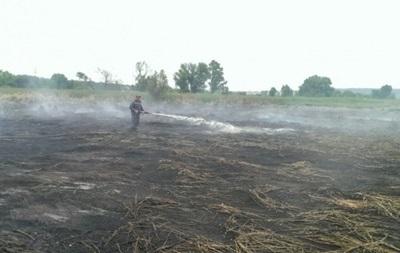 В Житомирской области сгорело 80 га пшеницы