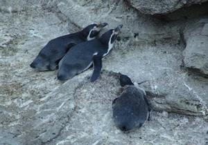 Активисты: В Киевском зоопарке погибли три пингвина
