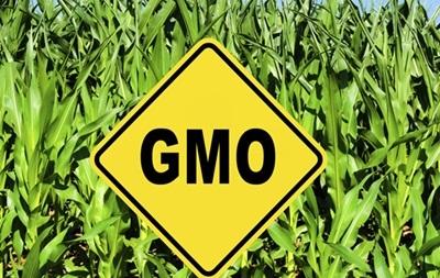 Германия запретит сельхозпродукты с ГМО