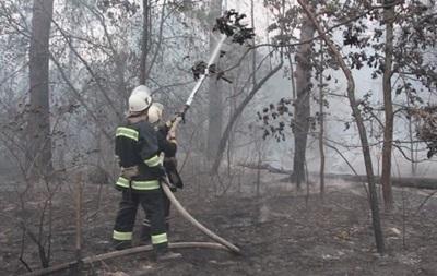 В Киеве ликвидировали пожар в Дарницком лесу
