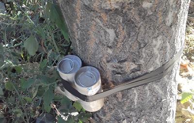 В Одессе обезвредили взрывчатку, прикрепленную к дереву
