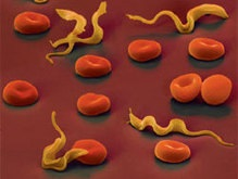 Противоинфекционный препарат способен бороться со СПИДом