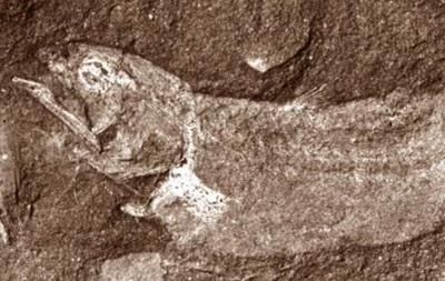 В Африке нашли древнейшую  сухопутную  рыбу