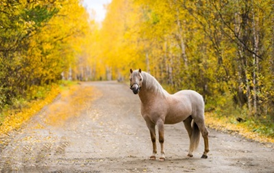 Во Львовской области лошадь стала причиной ДТП