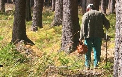 Во Львовской области ищут пропавших грибников