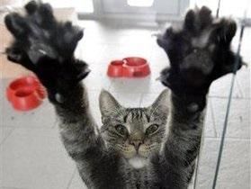 С 2016 года власти Бельгии будут стерилизовать всех котов и кошек