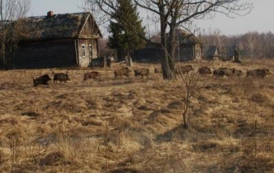 Экологи оценили состояние дикой природы в Чернобыле