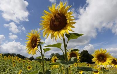 Минсельхоз США повысил прогноз урожая подсолнечника в Украине