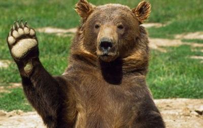 В России медведь ворвался в торговый центр