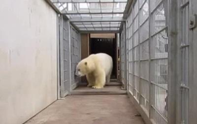 Мигранты пытались попасть в Англию в фуре с российским медведем