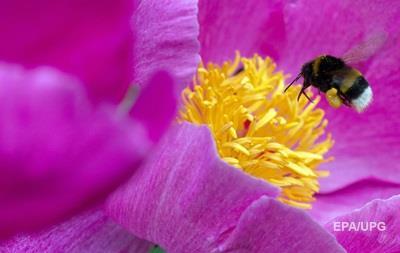 Британцы назвали шмеля своим любимым насекомым