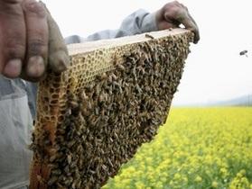 В ЮАР рой диких пчел атаковал учеников начальной школы