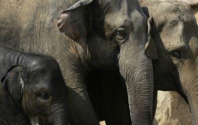 В Зимбабве обнаружили более 20 отравленных слонов