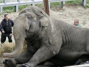 Слон Черновецкого в жару принимает освежающие ванны