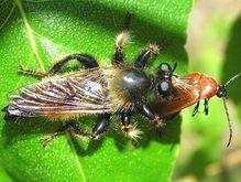 Ученые: Тропическим насекомым грозит вымирание