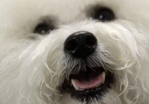 СМИ: В Киеве зафиксированы новые случаи гибели бездомных собак