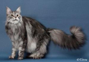 Умер самый длинный кот в мире