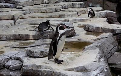 В Дортмунде расследуют таинственную гибель пингвина