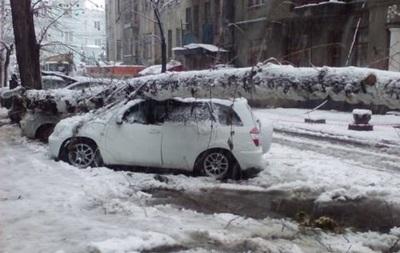 Жінка загинула внаслідок падіння дерева наХарківщині