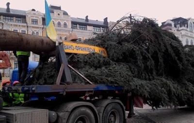 В Киев привезли главную новогоднюю елку страны