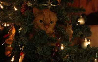 Куклачев призвал не делать из кошек новогодние елки