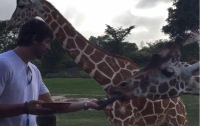 Экзотический отдых: Шовковский покормил жирафа и привлек внимание носорога