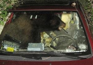 В США медведь угнал автомобиль