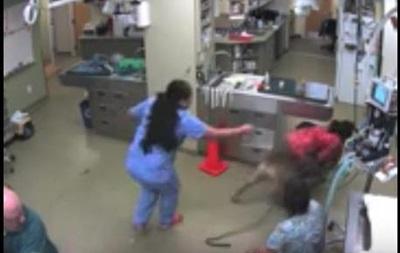 Пес сбежал от кастрации, захватив медсестру