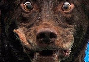 В киевском ботсаду бездомные собаки нападают на посетителей - СМИ