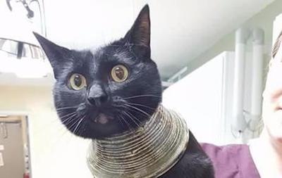 Застрявшая в вазе кошка покорила Интернет