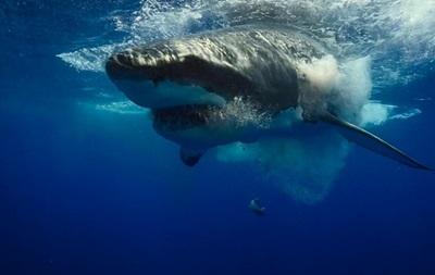В 2015 году акулы напали на людей рекордное число раз