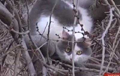 В Запорожье спасатели три дня снимали кошку с дерева