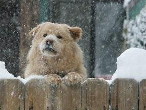 Погода на 4 февраля: в Украине потеплеет