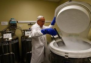 В США разработали искусственный яичник