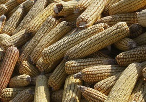 Сегодня вступило в силу постановление Кабмина об отмене квотирования экспорта кукурузы