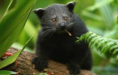 Торгівля дикими тваринами через Facebook непокоїть екологів
