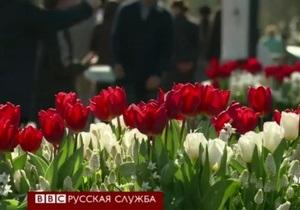 В Голландии открылся фестиваль тюльпанов, несмотря на холода