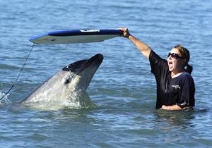 Большинство украинских дельфинариев содержат животных без разрешения Минприроды