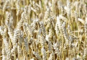 Кабмин может увеличить квоты на экспорт зерна