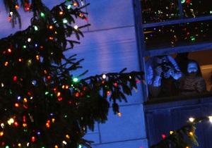 Киевляне могут взять новогоднюю елку напрокат
