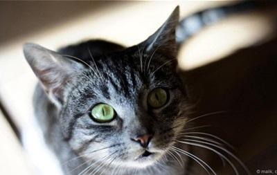 Британскую кошку по ошибке отправили посылкой
